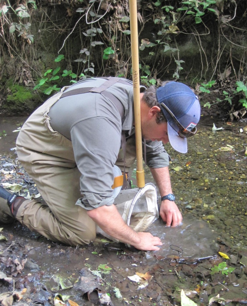 Volunteer collects macroinvertebrates from the stream
