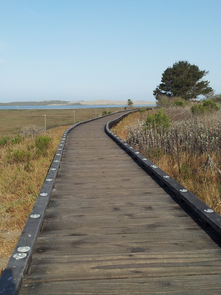 This boardwalk path takes you through the salt marsh at Morro Bay State Park.
