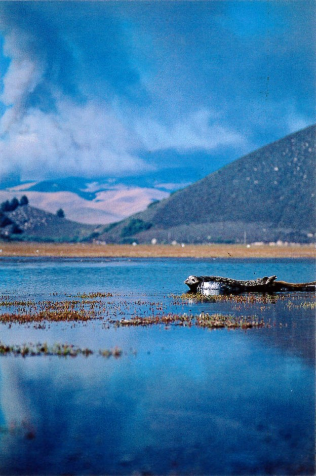 A harbor seal rests in the bay, beneath a sky full of smoke. Photograph by Ruth Ann Angus, August, 1994.