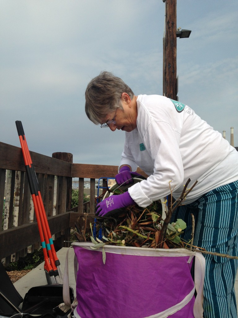 A volunteer empties her bucket of yard debris into a large portable container at the end of the day