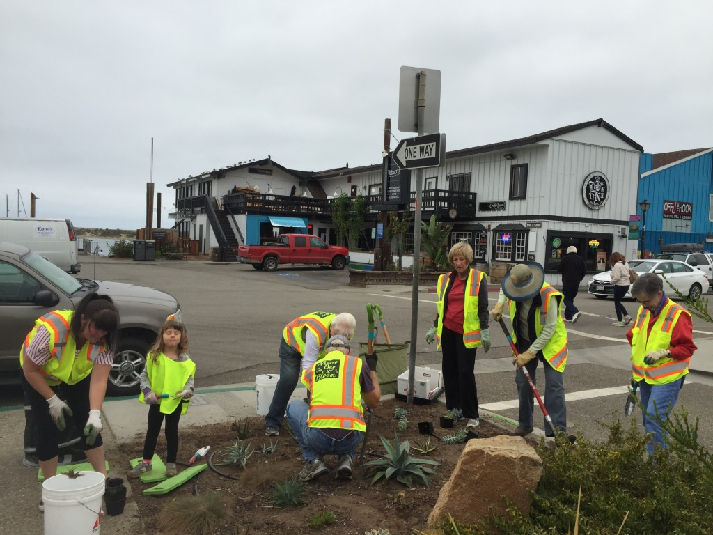 At the final cleanup of Centennial Parkway, 10 volunteers weeded and then planted succulents.