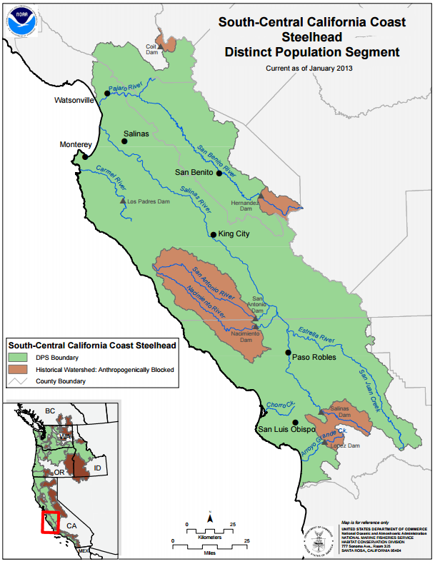 The range of the South Central California Steelhead stretches from the Pajaro River at the border of Santa Cruz and Monterey Counties, up to the Santa Maria River at the border of San Luis Obispo and Santa Barbara Counties. Map credit: NOAA West Coast Fisheries.