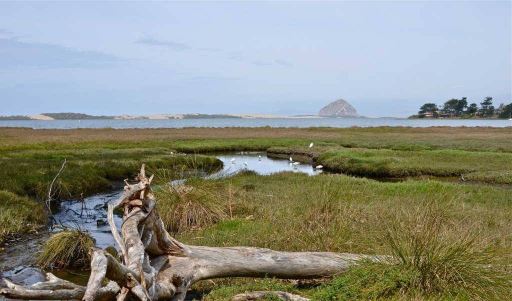 """""""Sweet Springs Nature Preserve – Los Osos,"""" photograph by Linda Tanner."""