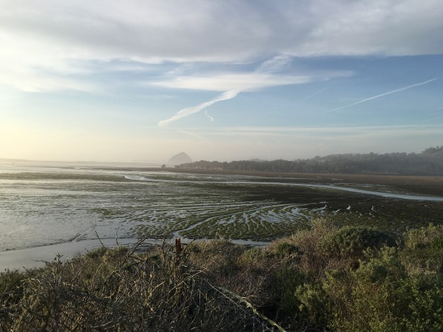 A view of the estuary from the Elfin Forest.