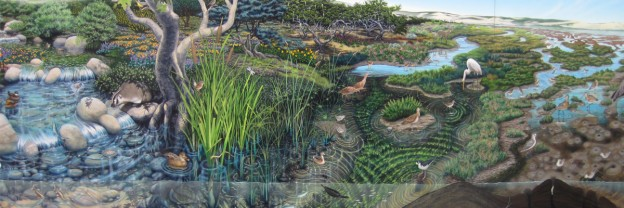 The image above is just a section of the beautiful mural in the Estuary Program Nature Center that shows the different animals and plants that live in local habitats. The portion above shows some of the fauna native to the upland creeks, the salt marsh, and the mudflats. Visit the Nature Center to see more of the mural and learn the names of these organisms.