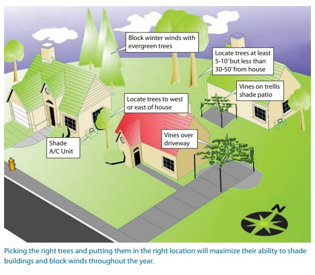 "Diagram and caption from the US EPA's ""Reducing Urban Heat Islands: Compendium of Strategies,"" which has a lot of great information about the benefits of trees."