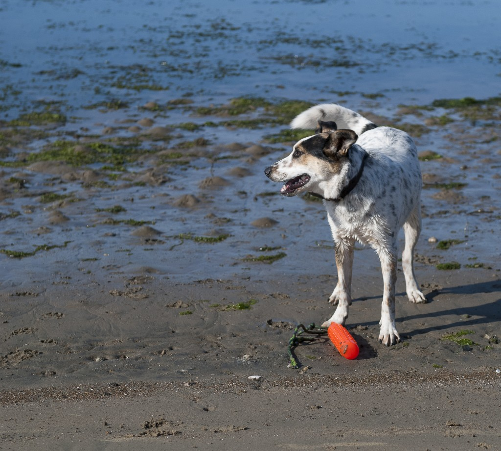 Executive Director Lexie Bell's dog, BB, enjoys playing fetch in an off-leash area near the bay.