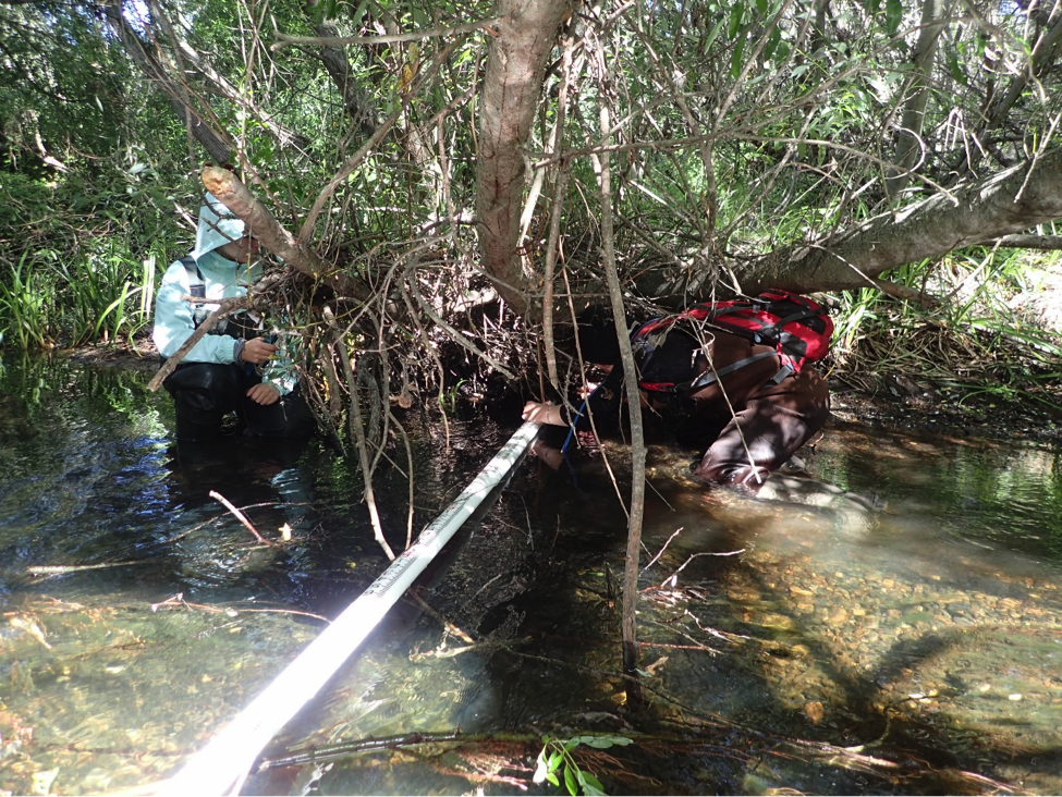 Our volunteers were all great! This volunteer crawled under a tree to measure water depth on lower Chorro Creek.
