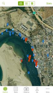 iNaturalist sightings map in Morro Bay