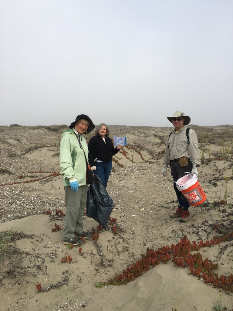 Volunteers expertly patrol the dunes, bags, bucket, and data sheet in hand.