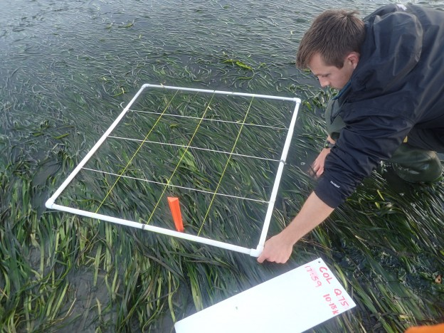Here, Shane places the quadrat at meter 75 of our 150-meter transect.
