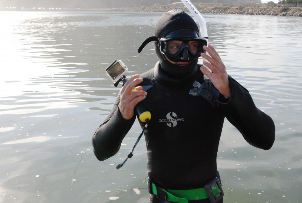 The cold water in Morro Bay means we need to wear thick, 7mm dive suits to keep us warm. These suits keep us nice and toasty, but they are very buoyant. For these subtidal surveys we need to be able to dive to the bottom to count eelgrass, so we wear dive belts to help us stay down in the water.  Here, Evan finishes putting on his gear and starts surveying.