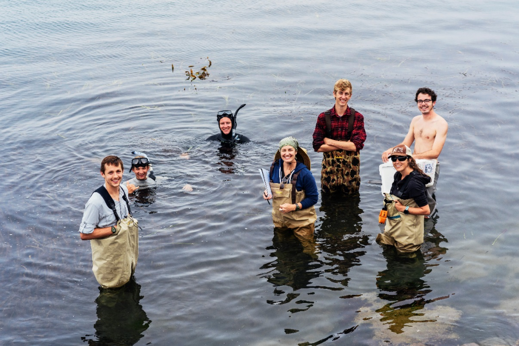 Cal Poly San Luis Obispo Professor Jenn Yost, her graduate students, and Morro Bay National Estuary Program staff took eelgrass samples for a genetics study that may help us better understand the cause of the eelgrass decline. Photograph by Tenney Rizzo.