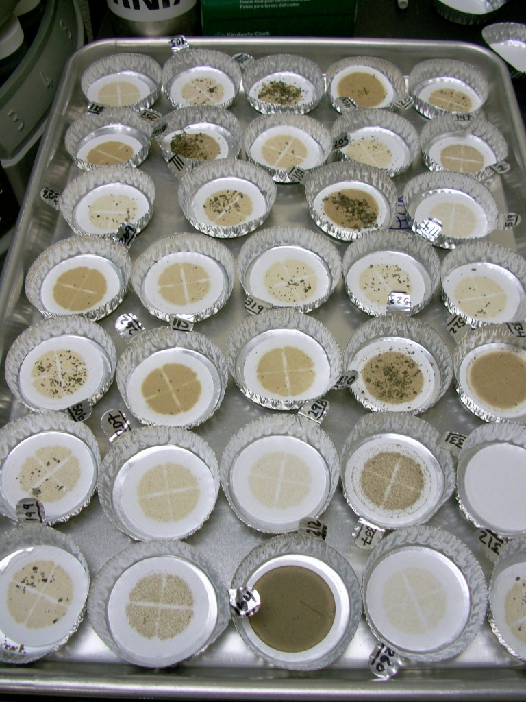 We dry the filters in the oven to remove all the water. We're left with the sediment from our samples.