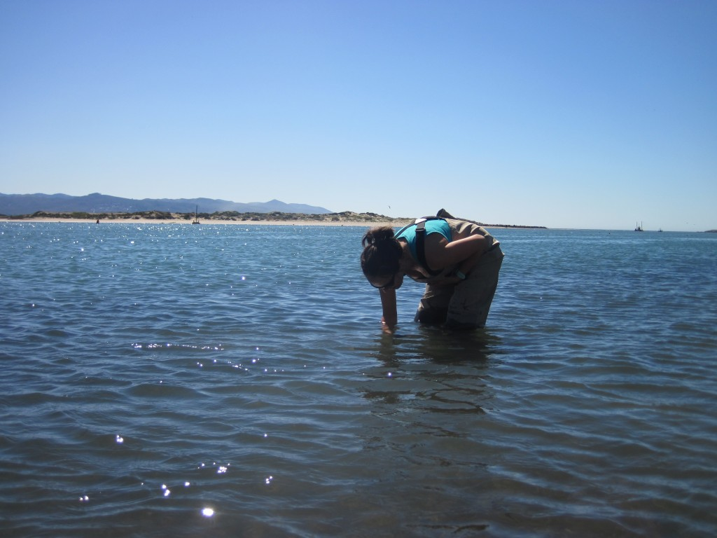 Estuary Program Monitoring Coordinator, Karissa, collects a shoot within her transect plot.