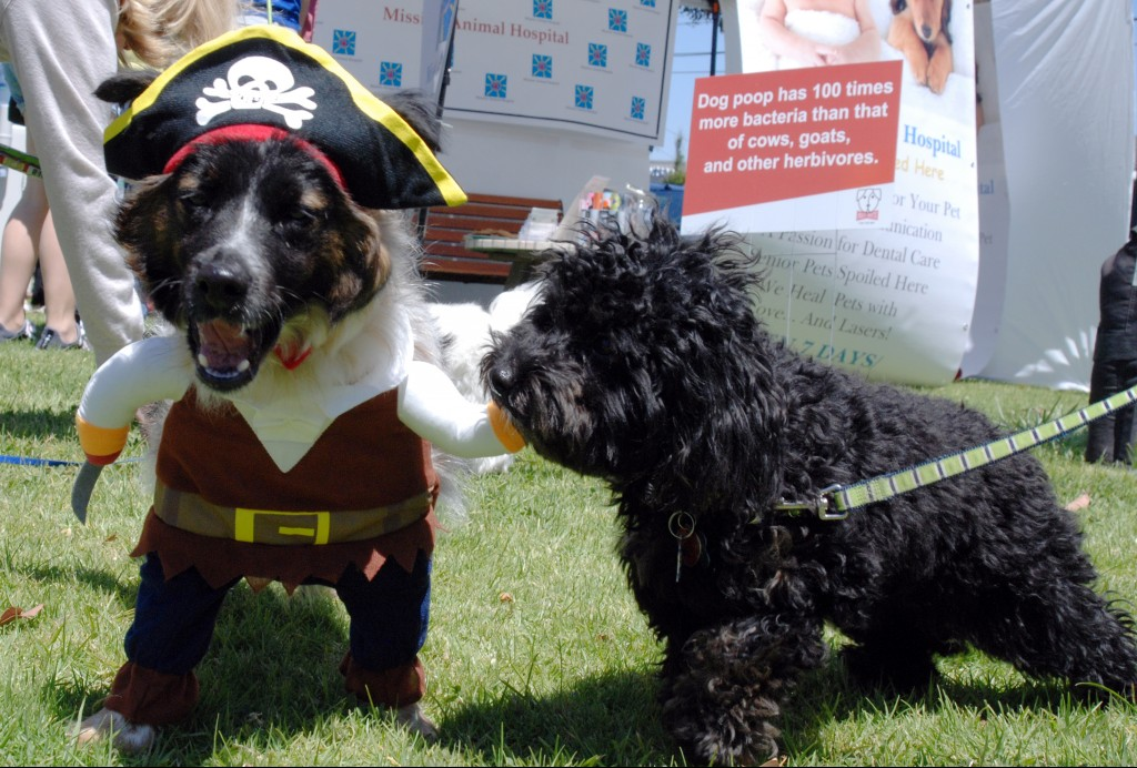 Our annual DogFest festival combines family- and fur-friendly fun with information about how dog owners can help keep our bay clean by picking up after their pets.