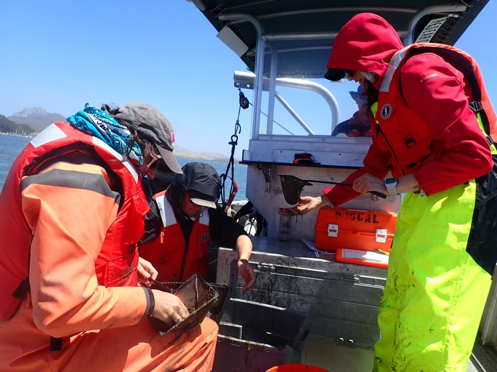 Jennifer sorts through sediment and algae in a net to look for fish and invertebrates.