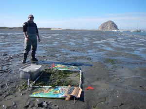 Tim Scully poses with his recently-planted eelgrass patch.