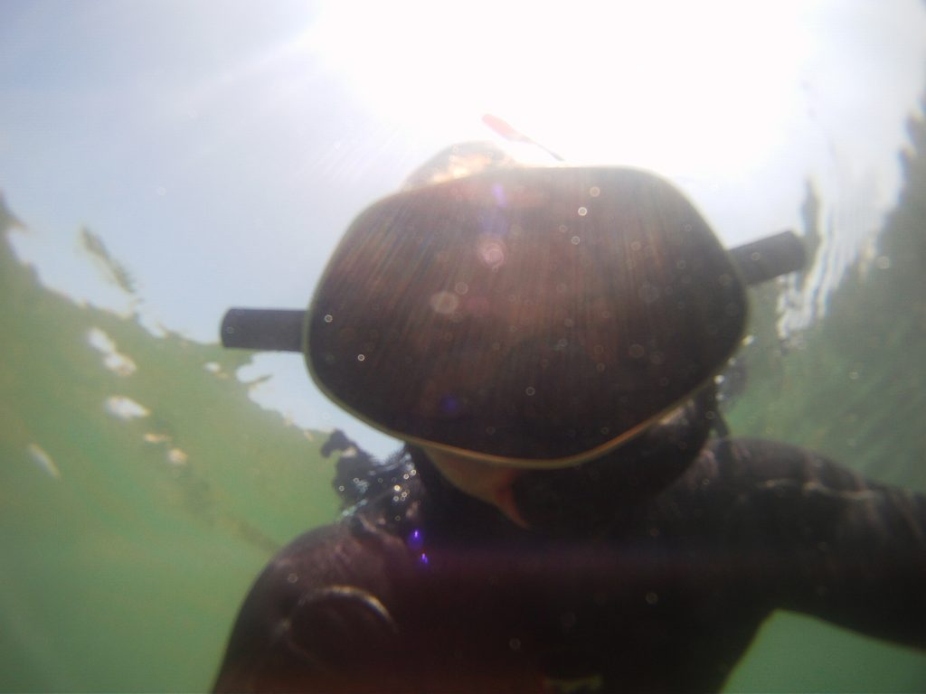One of our staff members accidentally caught himself on camera while snorkeling to monitor the health of eelgrass beds.