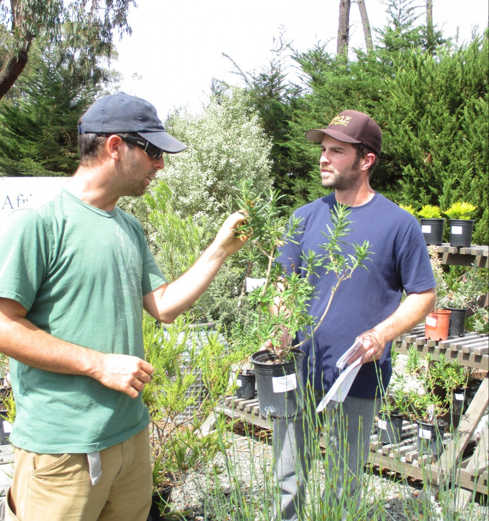 Brandon Taylor, Nursery Manager on right) talks about the low water needs of the Lions tail plant