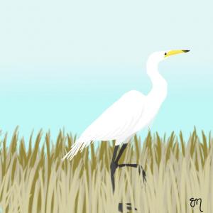"Eva Moylan's illustration, ""The Great Egret"""
