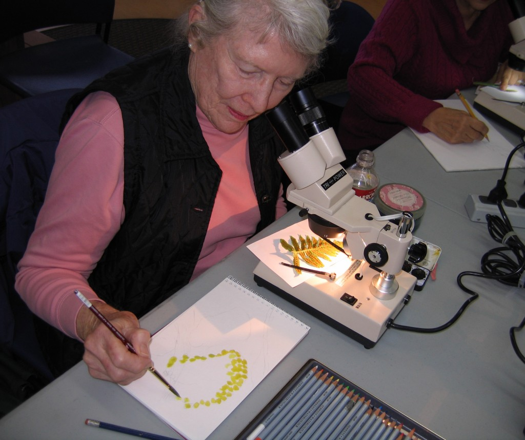An artist tries her hand at creating an image of a fern during Barb Renshaw's Sketching through the Scope class. Photograph courtesy of the Morro Bay Natural History Museum.