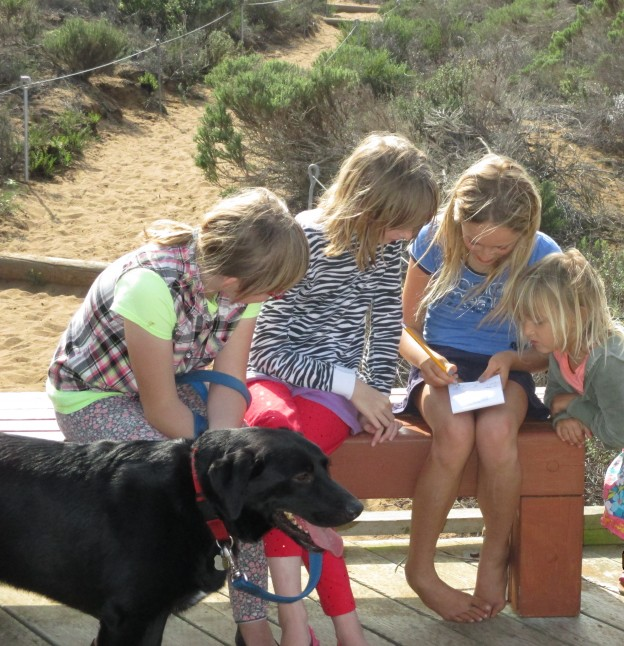 A group of students note the plants and animals they've seen on a walk through the elfin forest.