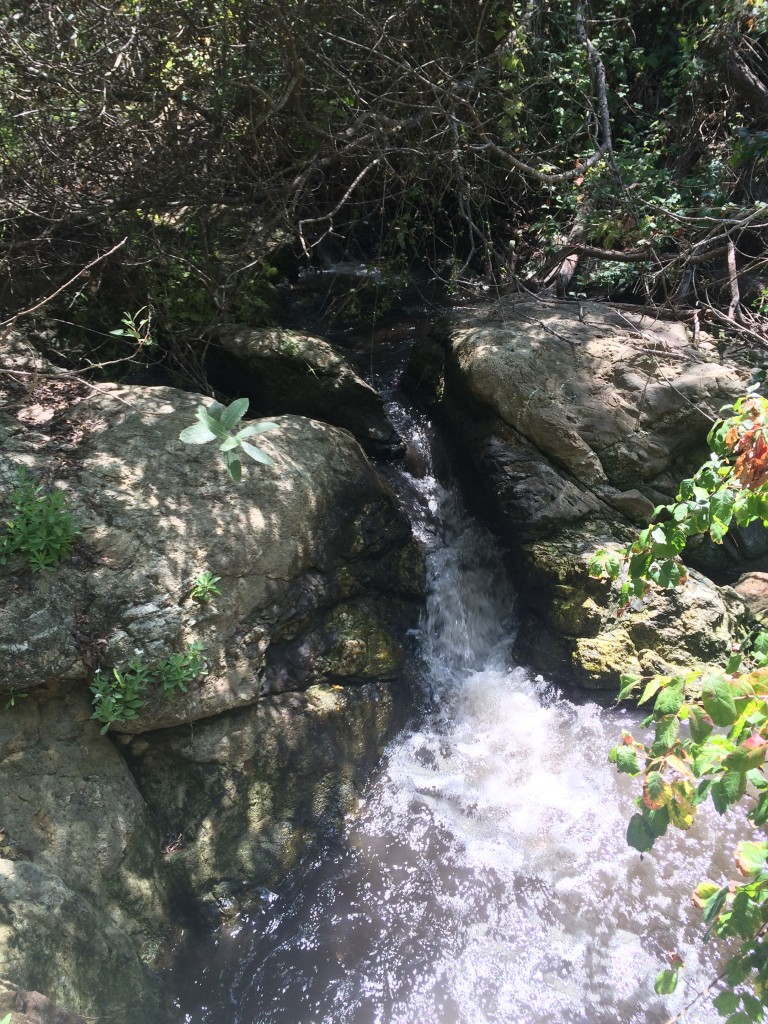 A small waterfall with healthy Poison Oak (Toxidendron rydbergii) pictured in the foreground, growing along Chorro Creek. Poison oak is a native plant that some consider beautiful.