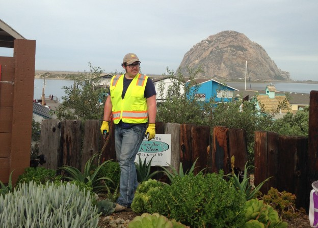 Thomas, a long-term volunteer with Morro Bay in Bloom, surveys the succulent bed at the top of Centennial Parkway's staircase.
