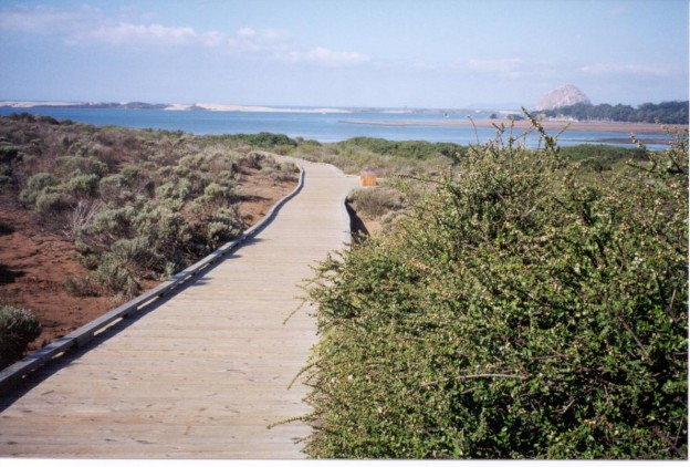 The boardwalk path through the elfin forest winds through eight different habitat types, and offers beautiful views of the estuary.
