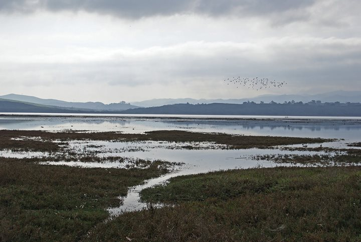 This photograph, courtesy of Ruth Ann Angus, shows the salt marsh during a King Tide.