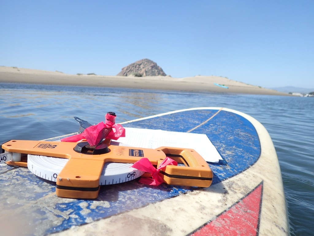 A surfboard works as the perfect desk for a day of eelgrass monitoring