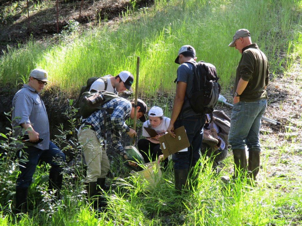 Our Field Technician, Evan, demonstrates for volunteers how to collect macroinvertebrates using a net.
