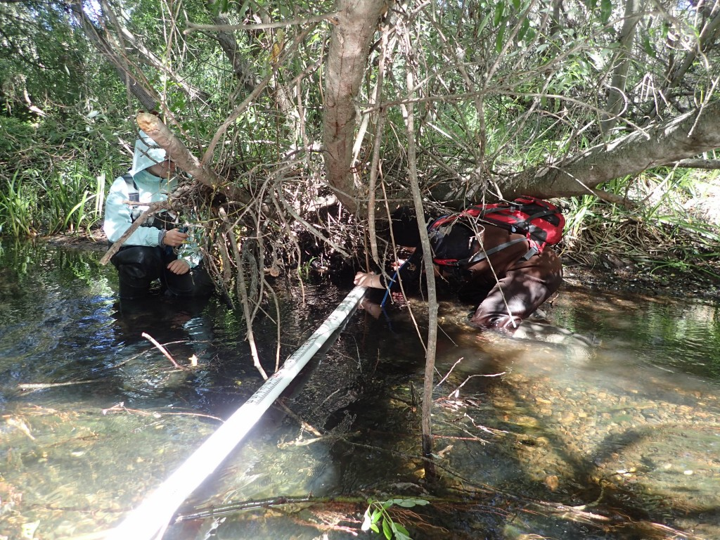 It's a tight squeeze to gather habitat data on Chorro Creek at a site located downstream of the South Bay Boulevard bridge.