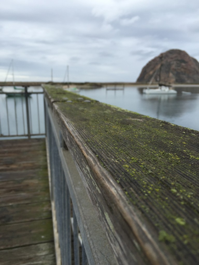 Moss grows along a wooden railing on Morro Bay's Embarcadero