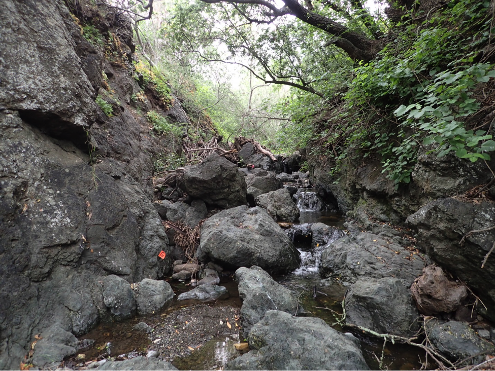 This is just one of the beautiful sections of creek we got to survey.