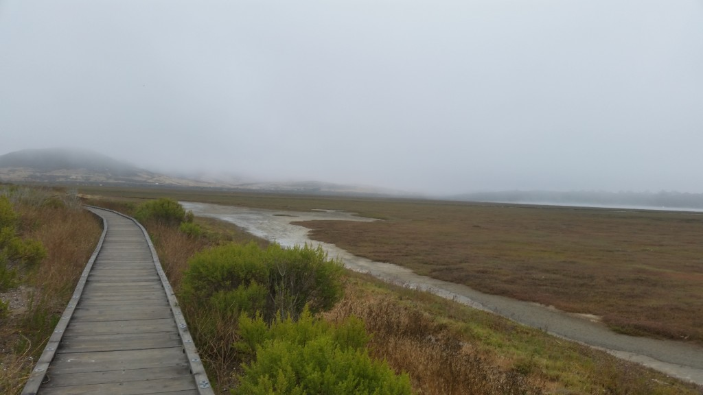 The Marina Peninsula Trail at Morro Bay State Park offers the chance to see many different plants and animals that thrive in the brackish waters of the salt marsh.