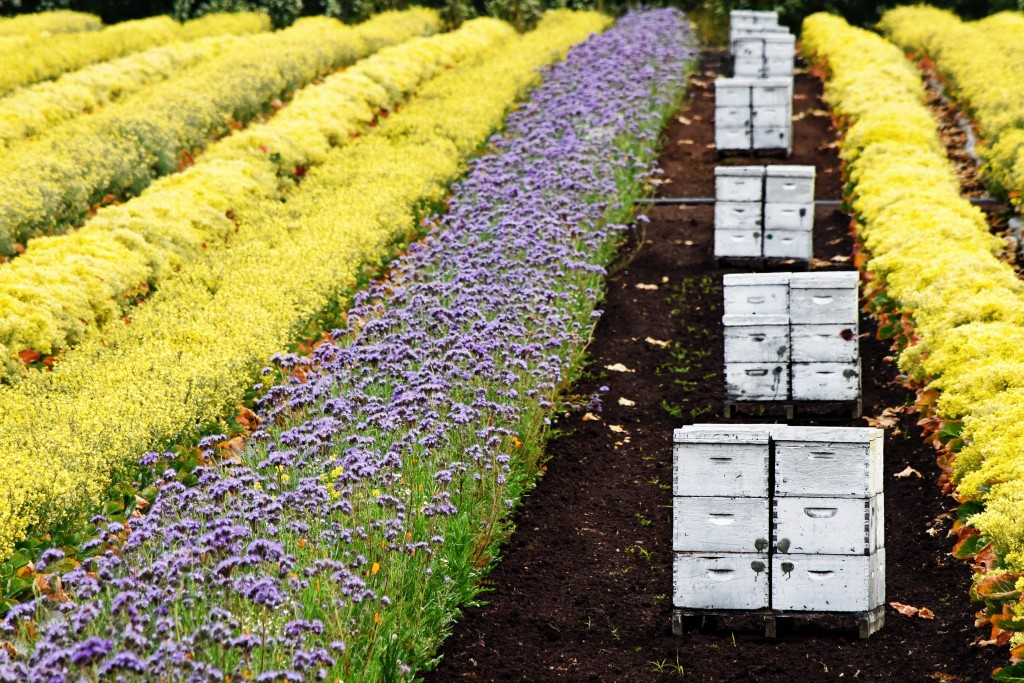 Bee Boxes in the Rows by Katrina Kramer