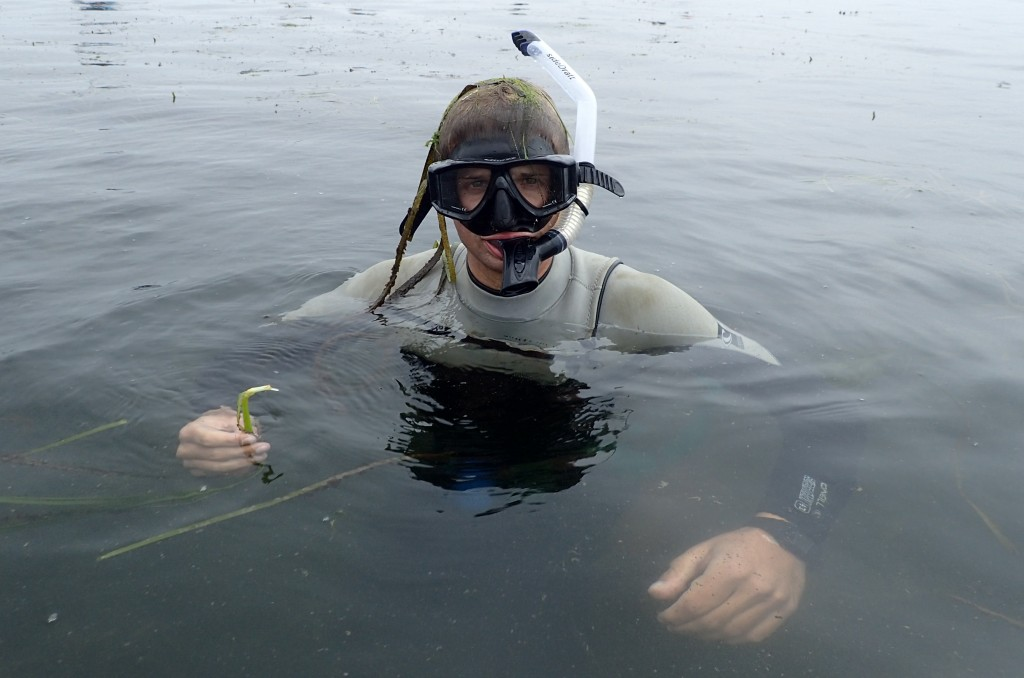 Our field technician Evan was one of the snorkelers, diving down to collect subtidal eelgrass. Dr. Yost is interested in seeing if there is a difference in genetics between subtidal and intertidal eelgrass.