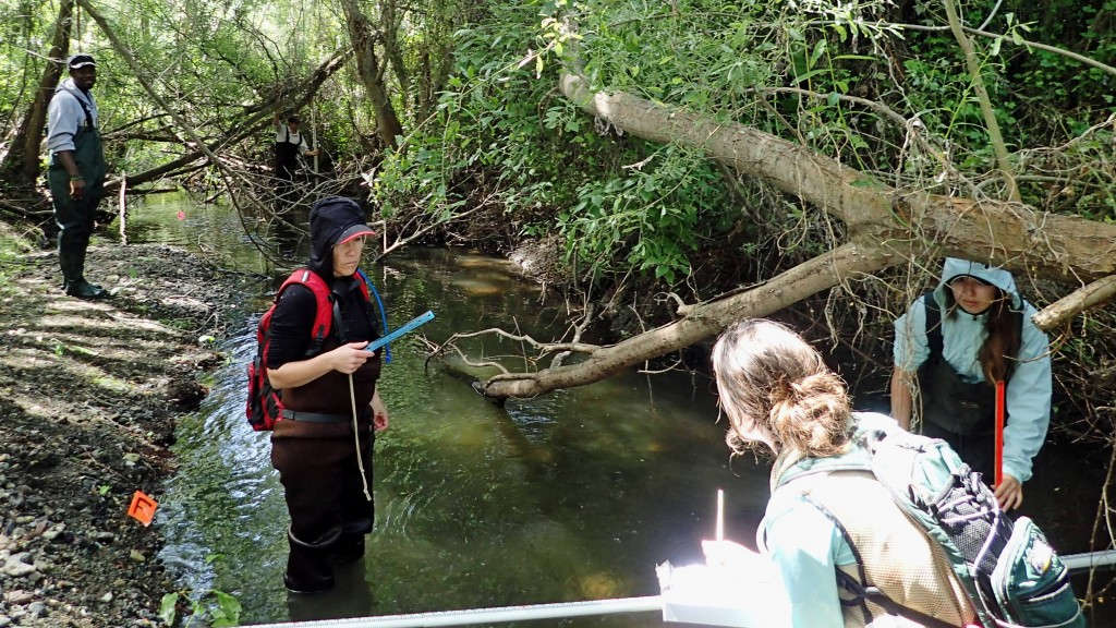 Bioassessment volunteers monitoring lower Chorro Creek. Measurements such as water depth and tree cover indicate whether the creek can support macros and sensitive aquatic life.