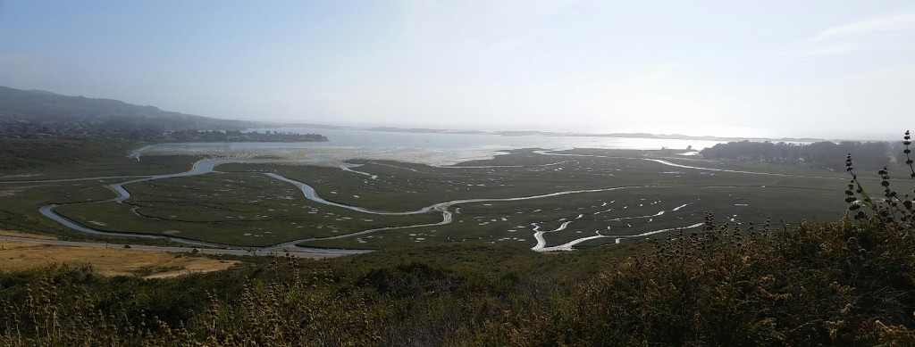 Water flowing through the tidal channels is visible from the upper reaches of Morro Bay State Park.