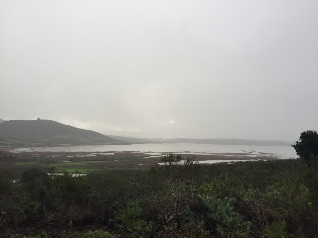 A view of the estuary from Upper State Park Road. The channels are full from the high tide and also from runoff.