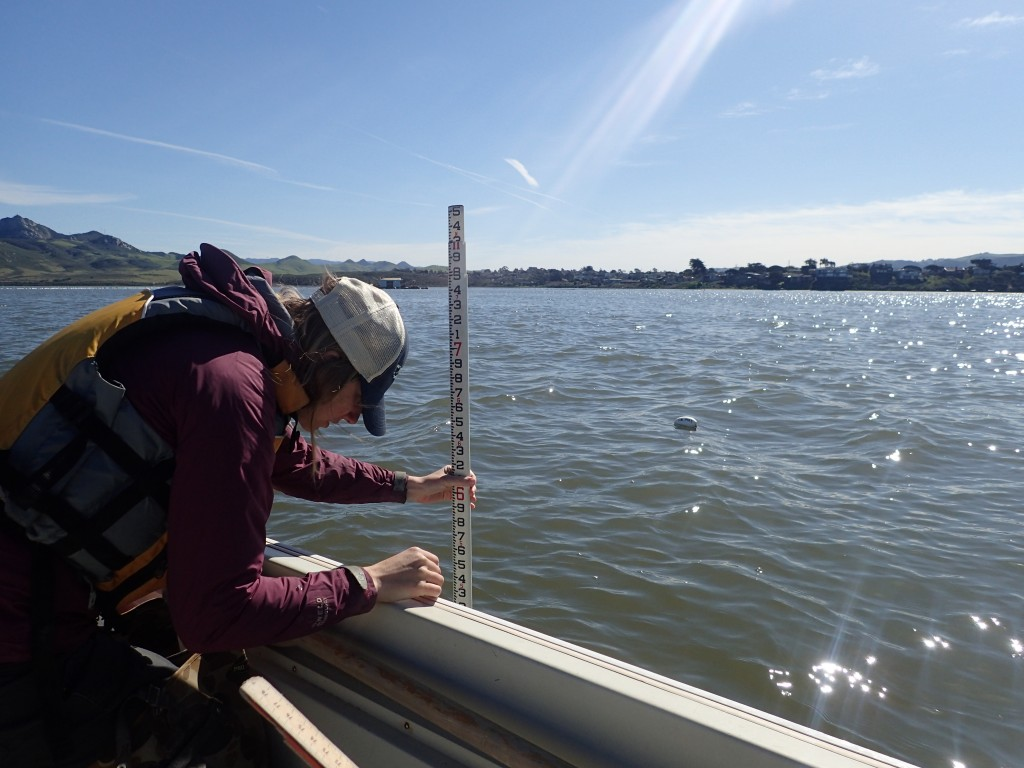 Carolyn uses a stadia rod (a giant ruler) to measure the water depth near a buoy at high tide.