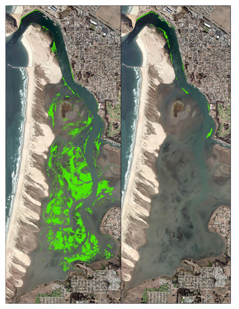 The maps above show the 344 acres of intertidal eelgrass detected in 2007 (left), as compared to the 2015 map where less than 20 acres were detected (right).