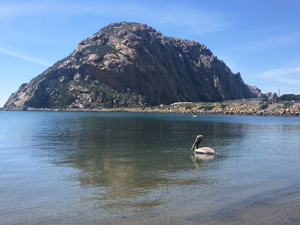 The pelican swam away toward a flock that had gathered on the bay side of the sandspit.