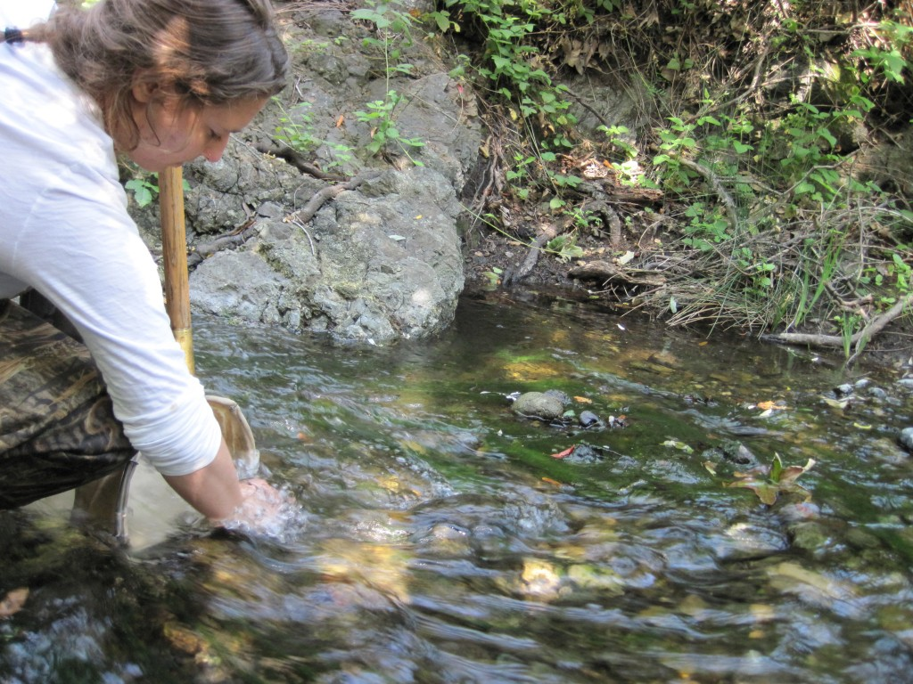 A volunteer collects bug samples in a net.