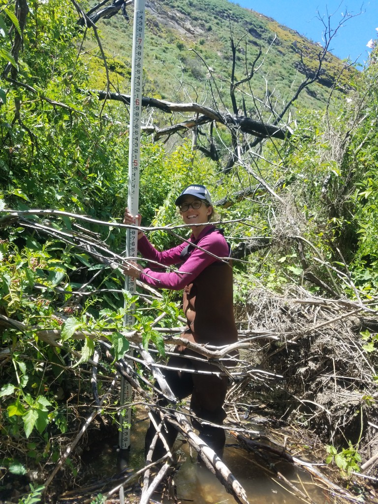 Kelley, our Monitoring Technician, holds up a stadia rod to help measure the slope of the creek. Behind her, you can see down the stream channel and imagine what completing this survey was like. The stream channel was extremely choked with vegetation, making it difficult to walk through, but at least it wasn't poison oakThough some of our surveys were a little brushy or had an extremely healthy poison oak population, we saw many gorgeous sections of the watershed.