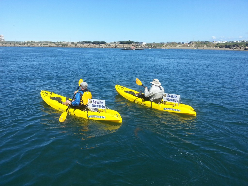 Two SeaLife Stewards volunteers paddle out on the Morro Bay estuary.