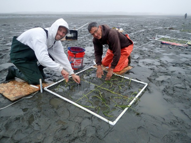George and Estuary Program volunteer, Nick, finish planting eelgrass shoots within a one-meter squared plot.