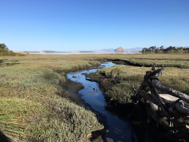 Sweet Springs, looking out at Morro Rock during the day.